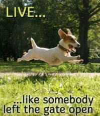 Jack Russell Terrier Rescue UK